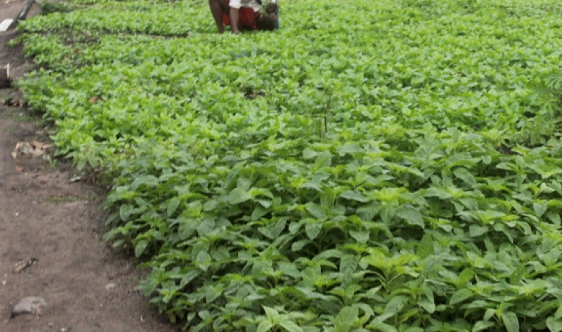 Mbanza-Ngungu : des engins agricoles pour faciliter la production