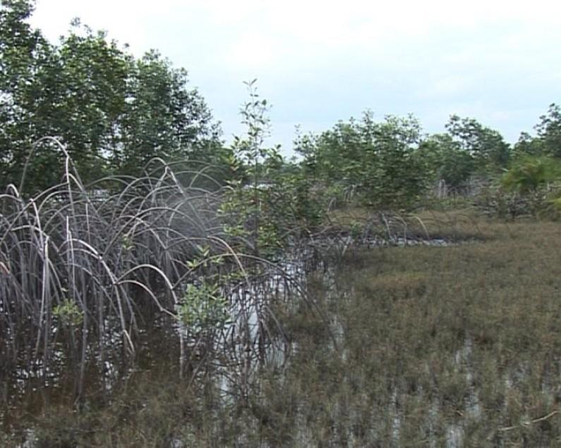 Bas-Congo : la vente d'une partie du parc marin menace la biodiversité