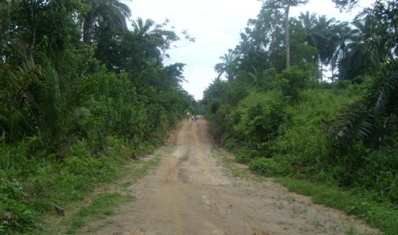 Bas-Congo:  Braconnage et coupe de bois menacent la réserve de Luki