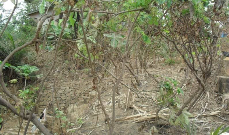 RD-Congo : une éplucheuse de manioc réduit le temps de travail