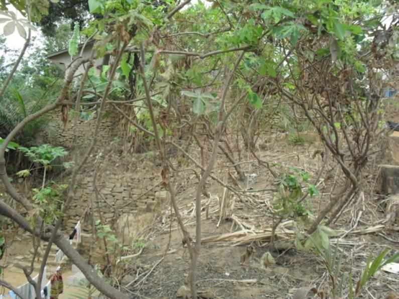 Matadi : les Bourgmestres disent non à la flambée du prix du manioc