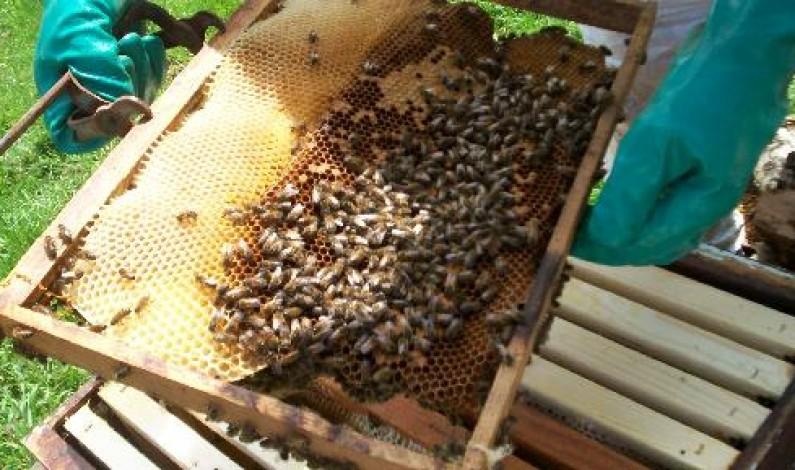 Cataractes : unis, les apiculteurs vivent mieux