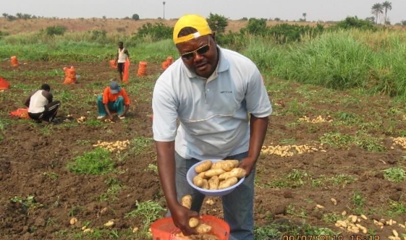 Mbanza-Ngungu : soutien salutaire aux cultivateurs de la pomme de terre