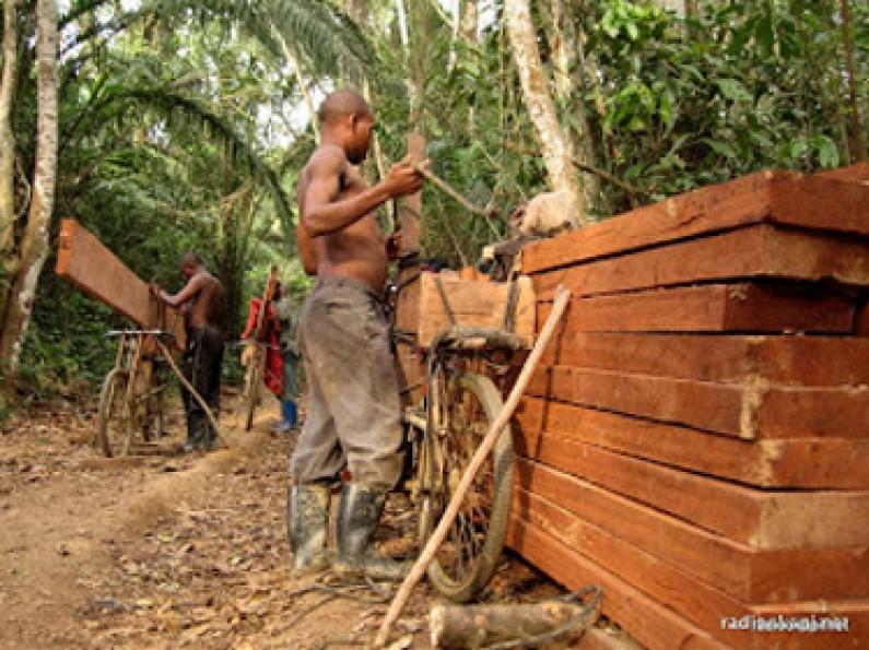 Bas-Congo : plus de d'exportation de bois
