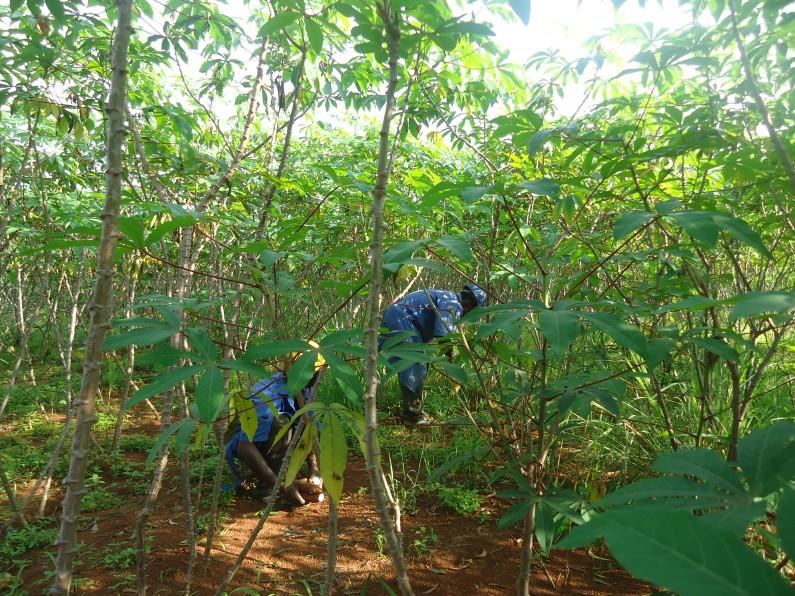 Bas-Congo:des paysannes offrent des faveurs sexuelles pour cultiver