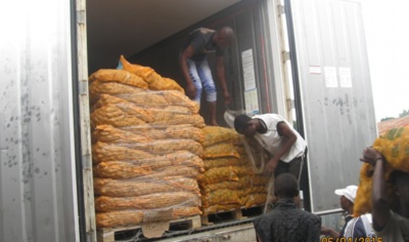 Mbanza-Ngungu : des semences pour une bonne campagne de la pomme de terre