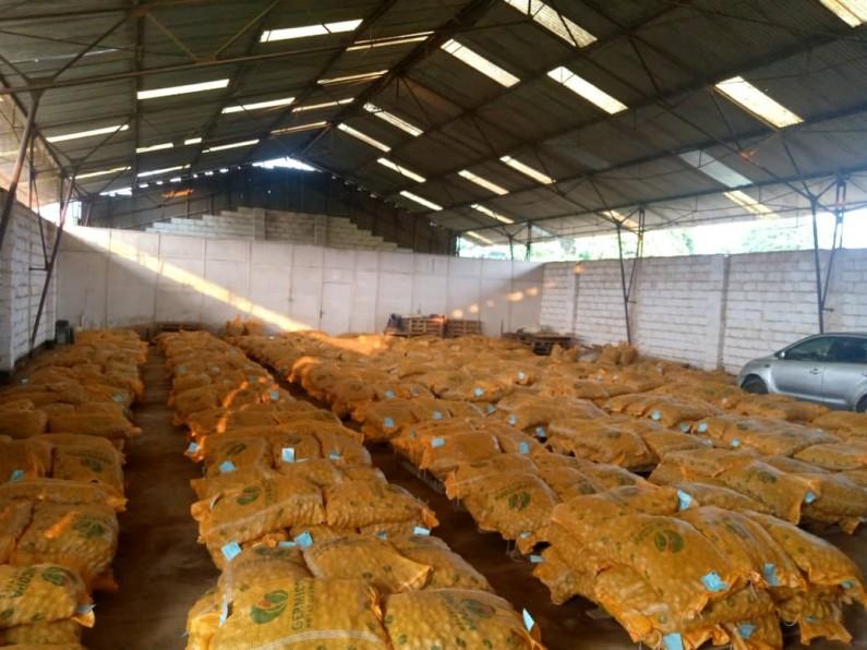 Mbanza-Ngungu : les semences de la pomme de terre sont arrivées, la culture va commencer