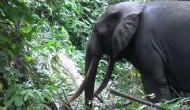Kongo central : le vice-gouverneur Justin Luemba demande aux habitants de Kiniati de ne pas s'approcher de l'éléphant en errance dans leur village