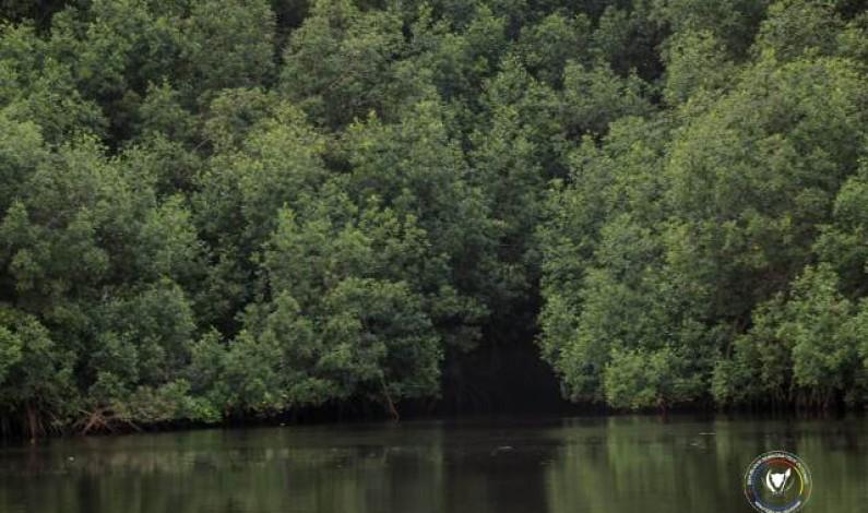 Spoliation, braconnage, déboisement… : Modero Nsimba décide de sauver le parc marin des mangroves de Muanda